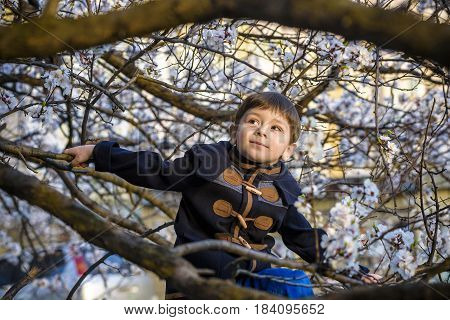 Boy Kid Hanging From A Blossom Spring Tree And Having Fun In The Nature