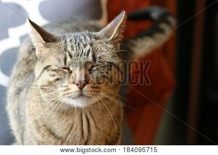 Tabby cat with Green Eyes sitting in Window with Pillows