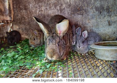 A family of rabbits, rabbits, and mom bunnies