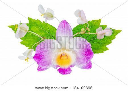 Beautiful Composition Of Dendrobium, Begonia Flower And Hibiscus Green Leaves, Isolated On White Bac
