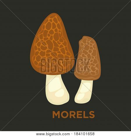 Morel edible mushroom. Vector isolated flat icon of morchella for mushrooming or gourmet cuisine design