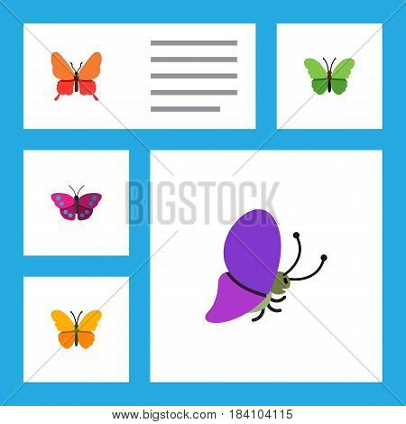 Flat Butterfly Set Of Milkweed, Summer Insect, Butterfly And Other Vector Objects. Also Includes Archippus, Milkweed, Butterfly Elements.