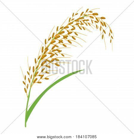 Oat stalk icon. Cartoon illustration of oat stalk vector icon for web