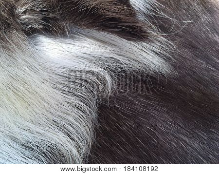 Fur surface. Deer Abstract Texture or background Fur