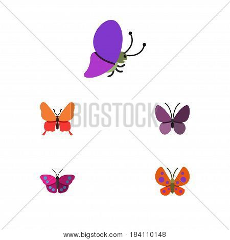 Flat Butterfly Set Of Summer Insect, Danaus Plexippus, Archippus And Other Vector Objects. Also Includes Insect, Archippus, Moth Elements.