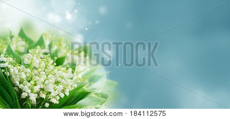 Bunch of Lilly of valley flowers blue bokeh background banner