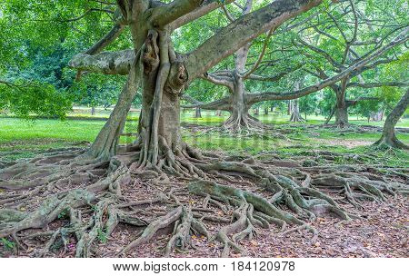 The Spreading Roots