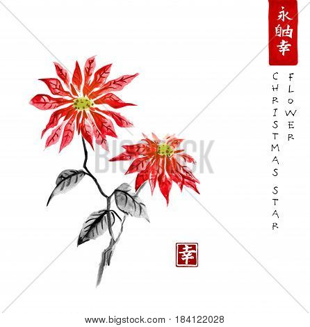 Poinsettia hand drawn with ink. Christmas star flower. Traditional oriental ink painting sumi-e, u-sin, go-hua