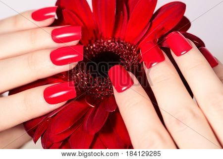 Beauty Hands With Red Fashion Manicure And Bright Flower. Beautiful Manicured Red Polish On Nails