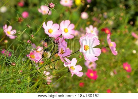 Beautiful pink wildflowers on a green field.