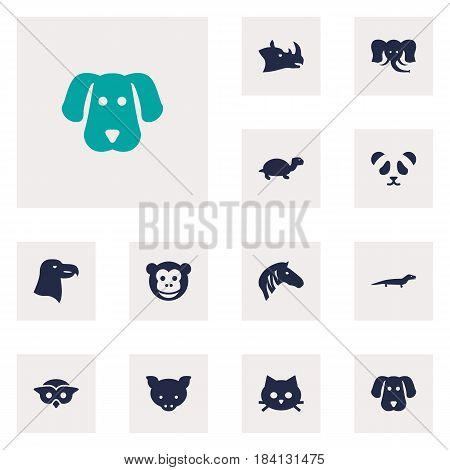Set Of 12 Beast Icons Set.Collection Of Gecko, Rhinoceros, Hog And Other Elements.