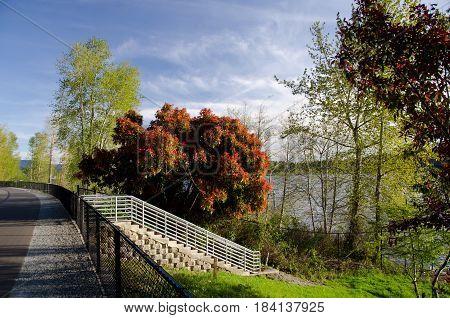 Empty Sammamish Lake Trail