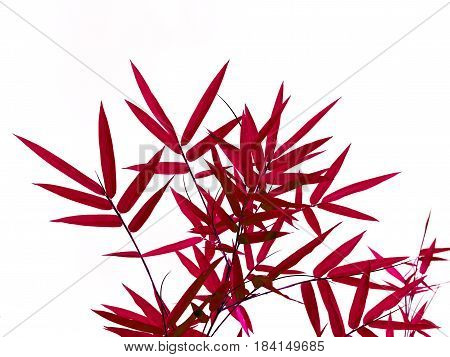 Red bamboo leaves isolated on white background.