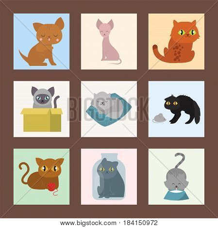 Cute cats cards character different pose funny animal domestic kitten vector illustration. Pet feline portrait fluffy young adorable mammal whisker pussy cartoon small kitty.