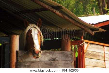 Beautifull brown and white horse looking at the visitors of a farm in latinamerica, Colombia