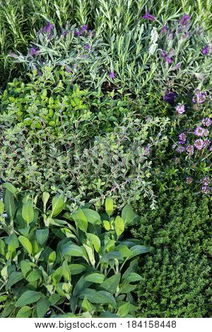 Many Herbs In A Garden Herb Bed.