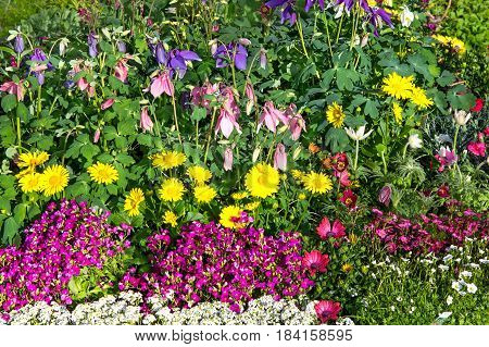 A Flower Bed With Beautiful Blossoms.