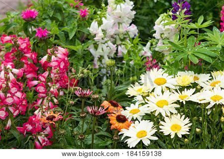 Perennial Plants In The Garden.