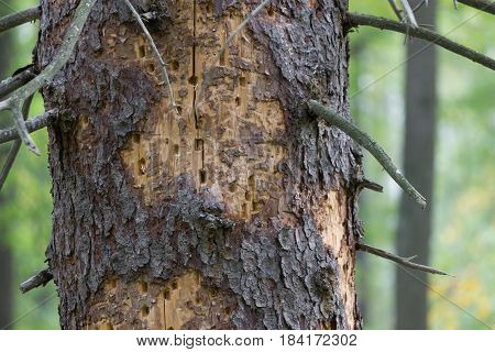 old tree eaten by termits in green forest