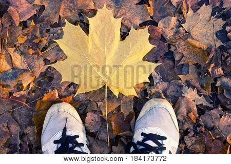 Autumn Season In Sneakers