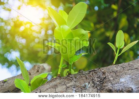 New Green Leaf Born On Old Tree With Light