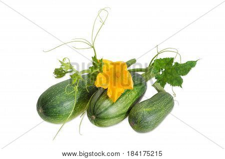 Three fresh zucchini and stalk with leaves tendrils and flower on a light background