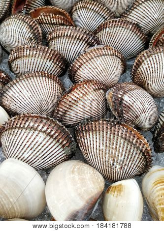Fresh scallop shell on ice in seafood market