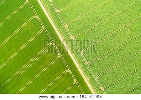 Aerial view of a wheatfield with lanes in spring