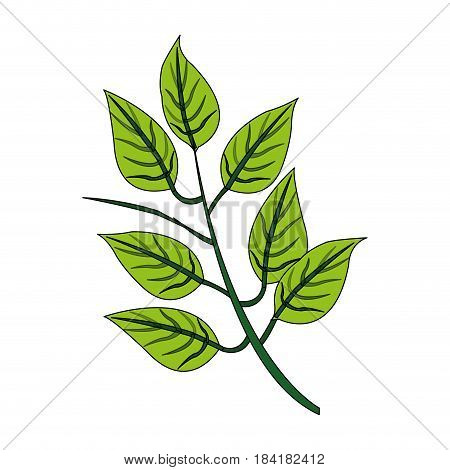 color image realistic branch with ramifications and leaves vector illustration