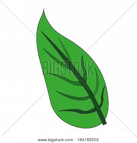color image green leaf with ramifications vector illustration