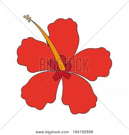 color image Chinese rose with trumpet shaped petals vector illustration