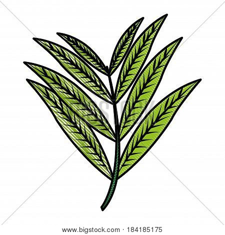 color blurred stripe image realistic branch with elongated leaves vector illustration