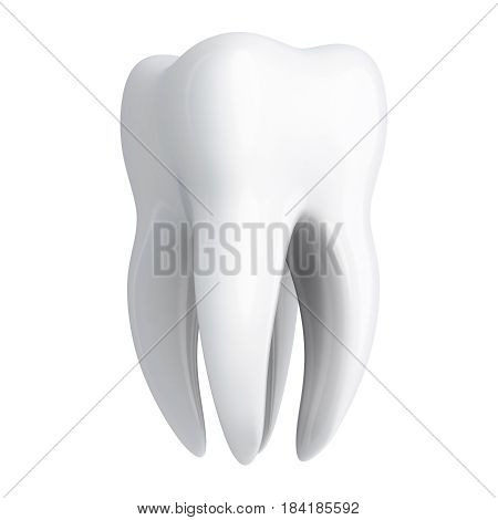 Human tooth white on white background. 3d illustration