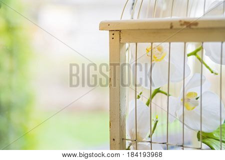 Closeup empty birdcage used for interior decoration with flowers inside