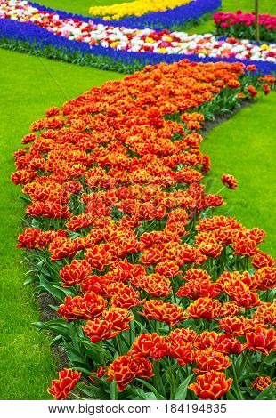 Tulip flowers Keukenhof garden, The Netherlands, Holland