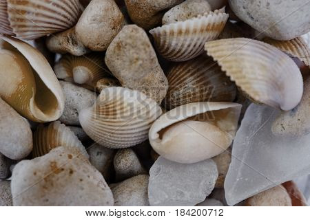 Macro view of seashells. Seashell background. Texture of seashells. Abstract texture and background for designers.