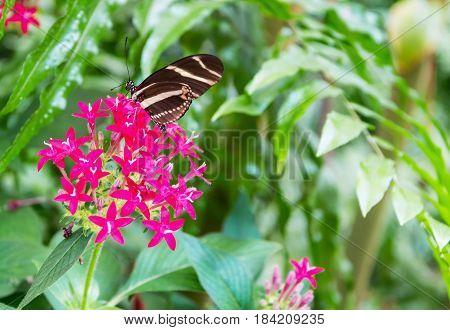 Mariposa posada sobre una bella flor rosa
