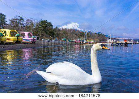 Yamanaka lake with fuji mount background and swan