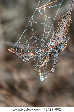 Detail of dew drops on a spiderweb