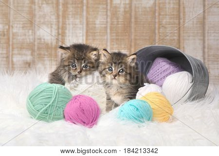 Adorable Kittens With Balls of Yarn in Studio