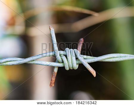 rust barbed Wire with green nature background.