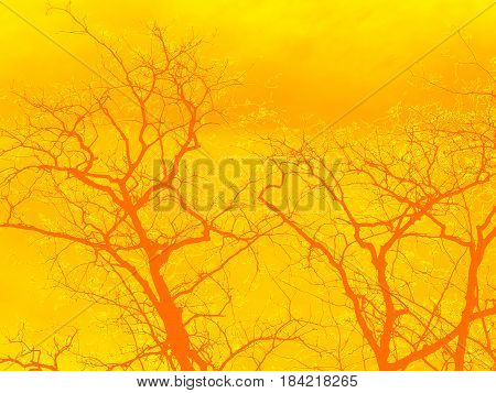 Strip of tree branches silhouette against golden orange and yellow background.
