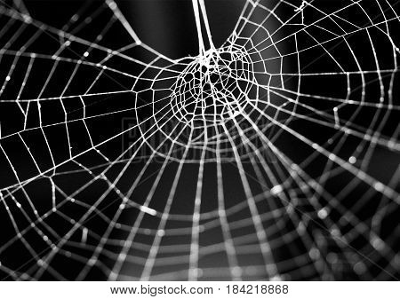 a close up shot of a beautiful created spiderweb