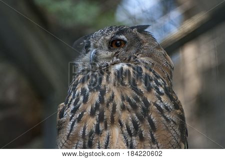 The owl sits in a cage and wants to sleep