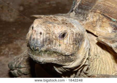 Close-up image of a large tortois showing eye and mouth poster