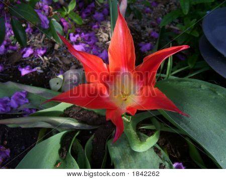 Red Burst Flower