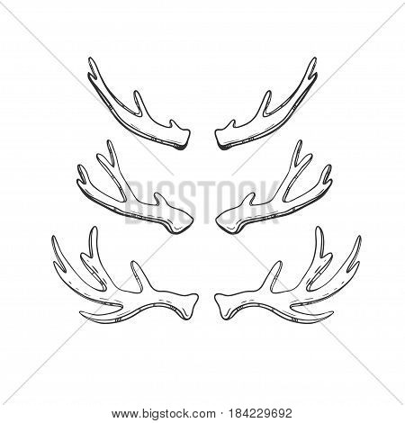 Set of hand drawn deer and moose horns isolated on white. Vector natural sketch.