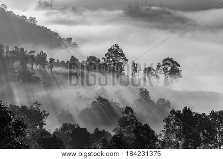 Mist Covering Tree On The Mountain With Sunlight