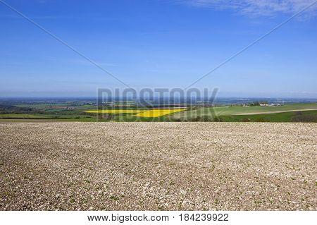 Agricultural Vista In Springtime