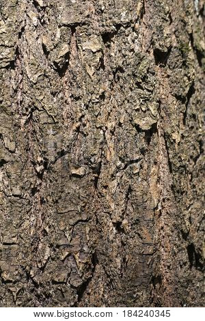 The texture of the tree bark background